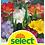 Thumbnail: Freesia Farbenmischung - Freesia-Hybriden