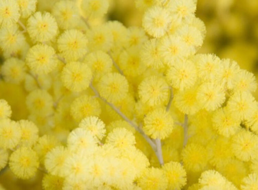 MIMOSA: MIMOSA IS NOT JUST FOR SUNDAY BRUNCH.