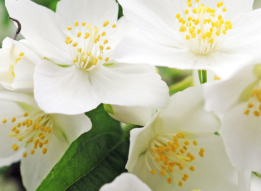NEROLI: ENHANCE YOUR PURE INNER BEAUTY.