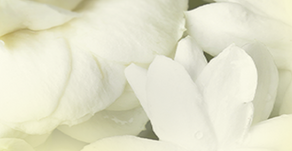 JASMINE: BRING HARMONY AND OPTIMISM INTO YOUR LIFE.