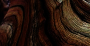 CEDAR WOOD: LOVE TO CULTIVATE YOUR NATURAL CHARISMA? HERE'S WHAT YOU NEED.