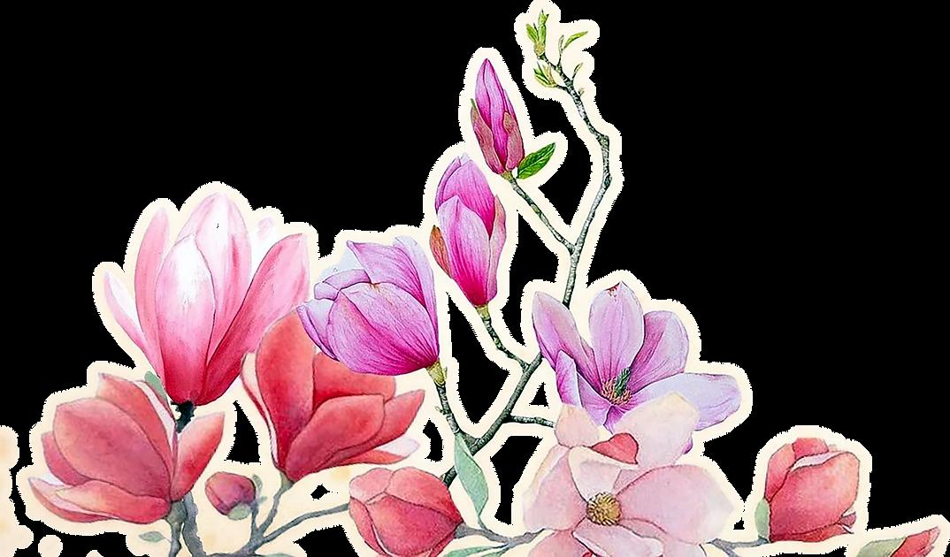 fleurs_thérapeute2.png