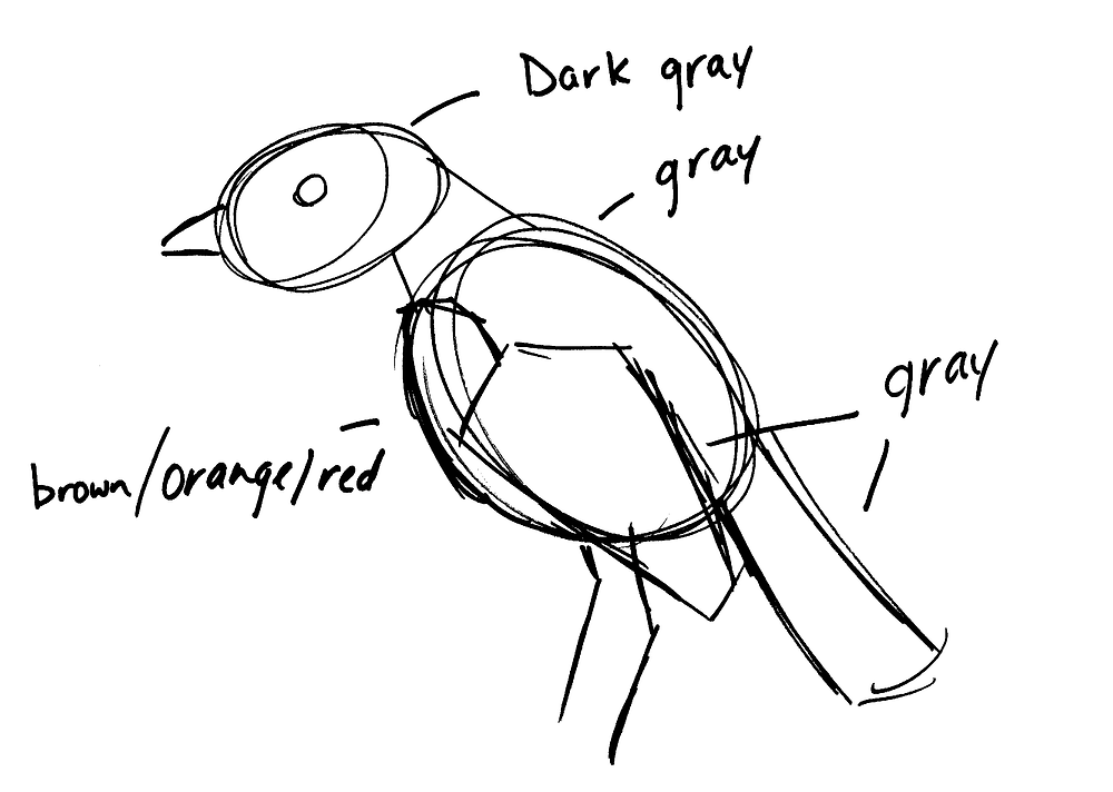 Rough sketch of American Robin. Notes from upper left going clockwise: Dark gray, gray, gray, brown/orange/red