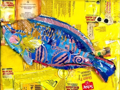 Queen Parrotfish on Yellow Plastic