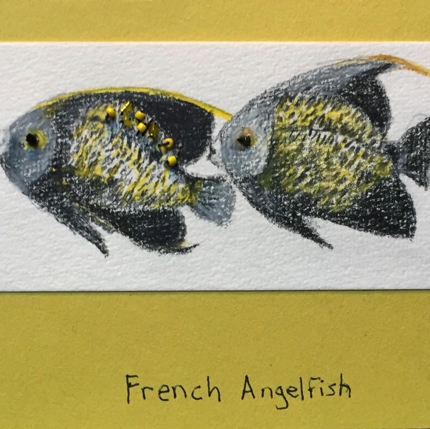 Two French Angelfish Card