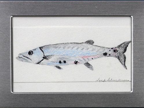 Barracuda I
