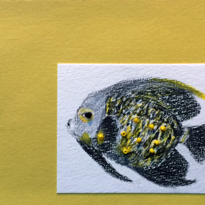 French Angelfish I Card
