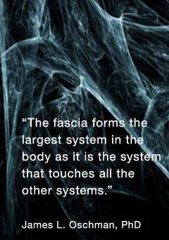 Muscle tension or Fascia tension?