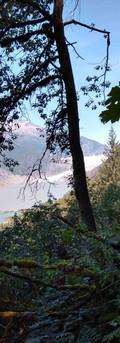 Mendenhall Glacier hiking trail