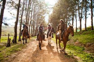 African Horse Company 1.jpg