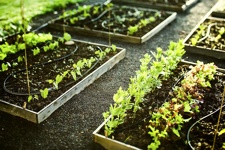 Gardening.webp