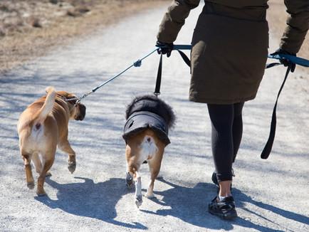 Should You Hire A Dog Walker?