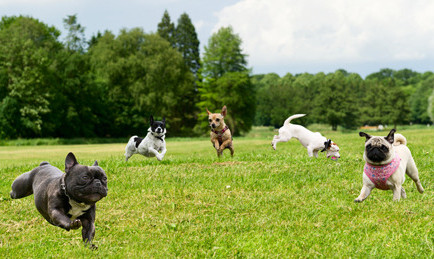 To Dog Park, Or Not To Dog Park