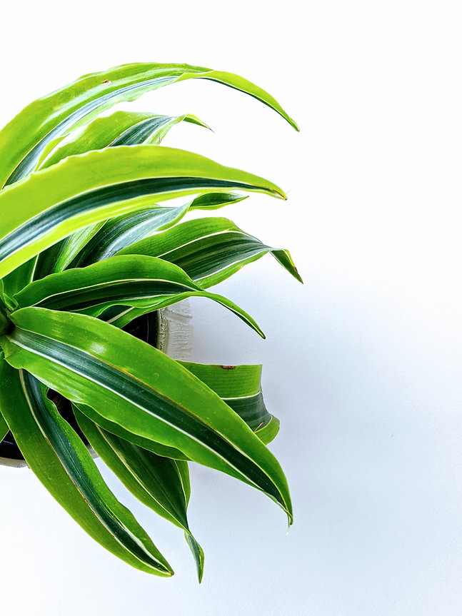 Green Plant - Kerry Dunn The EFT Way.jpg
