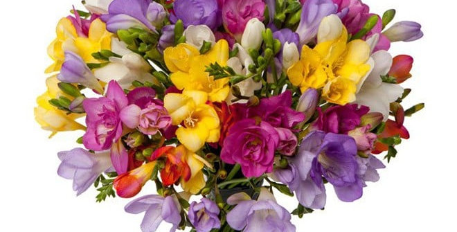 Bouquet bulle de 20 freesias mixtes couleurs + verdure