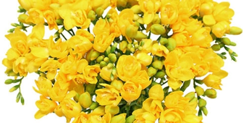 Bouquet Bulle de 20 freesias jaunes + verdure