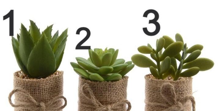 Plantes succulentes en pot plastique 3 différente