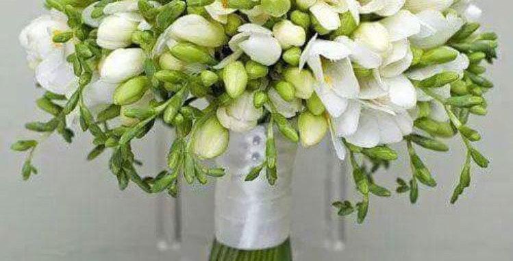 Bouquet bulle de 20 freesias blancs + verdure
