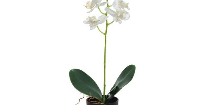 Orchidée en pot polyester