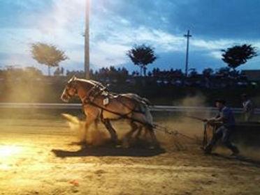 HorsePullers4.jpg