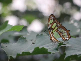 Des ailes de rêve