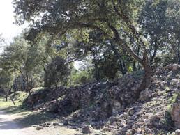Pascale Sicilia