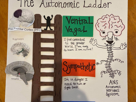 Learning about the Brain #1: The Amygdala (and the Polyvagal Ladder)
