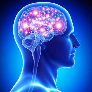 Brain picture.jpg