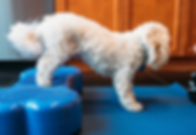 Dog-trainer-nyc-Services-physical-rehabi