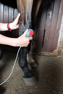 horse-joint-mobility-limitations.jpg