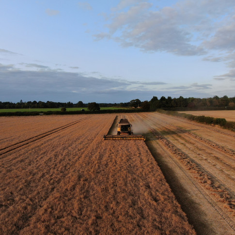 Combining linseed