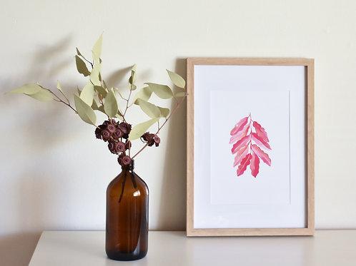 Print - Succulent Pink
