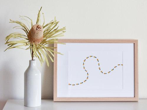 Print - Honey Ants