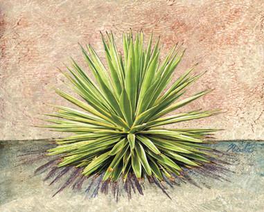 Cactus 1 4600.jpg