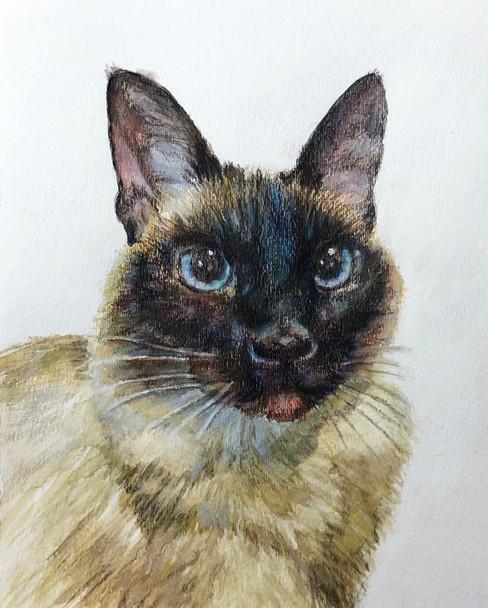 cat painting.jpg