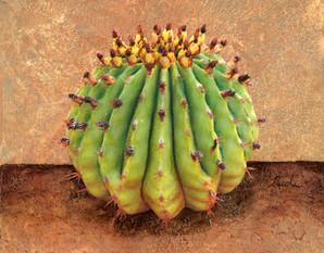 Cactus 6 4500px.jpg