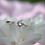 Thumbnail: Alana CZ Ring