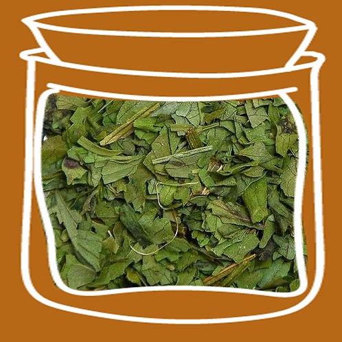 Cilantro en hojas