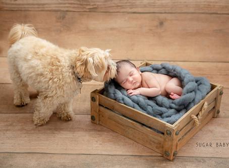 Baby Angel, Newborn