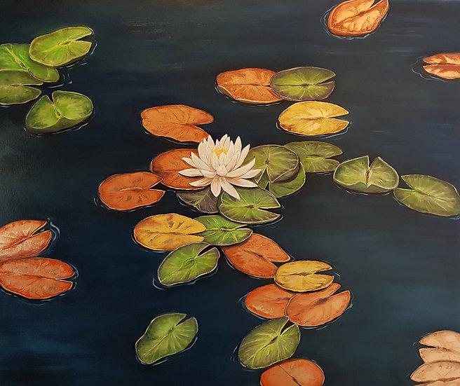 Gracious Lillies