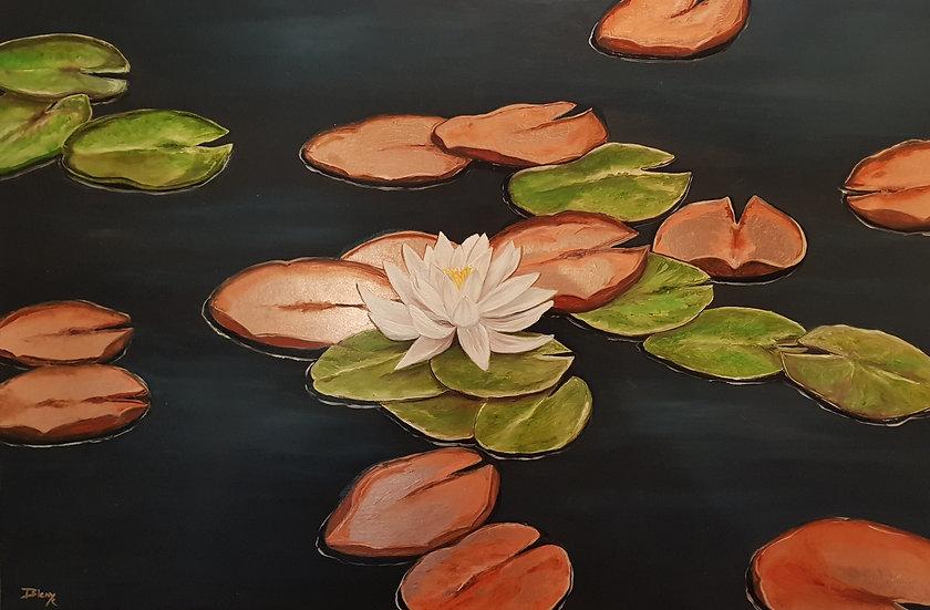 Gracious lilies (2)