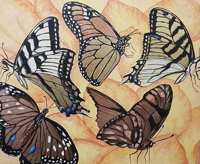 Butterflies Symphony