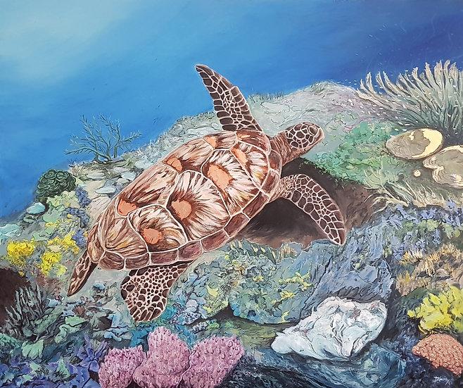 The Beautiful Aquatic Turtle