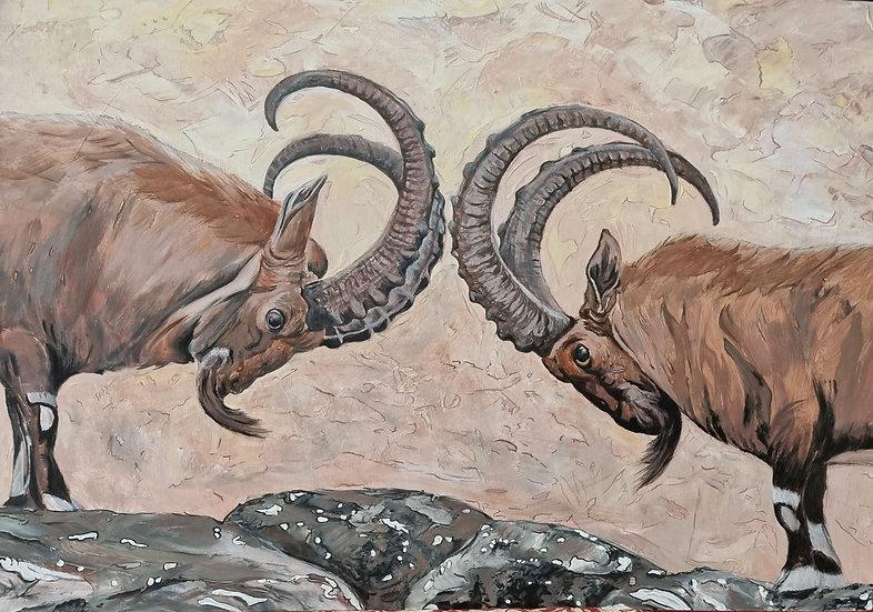 The Nubian Ibex