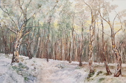 Boreal forest - sold