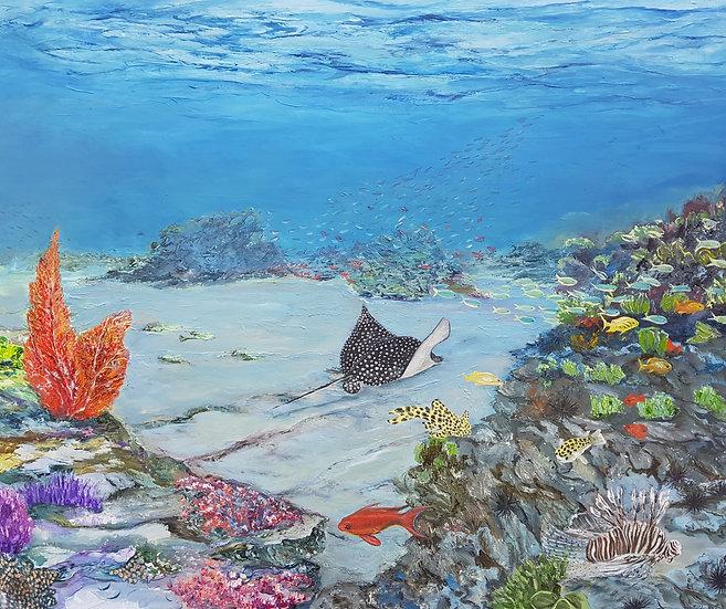 Untouched corals (2)