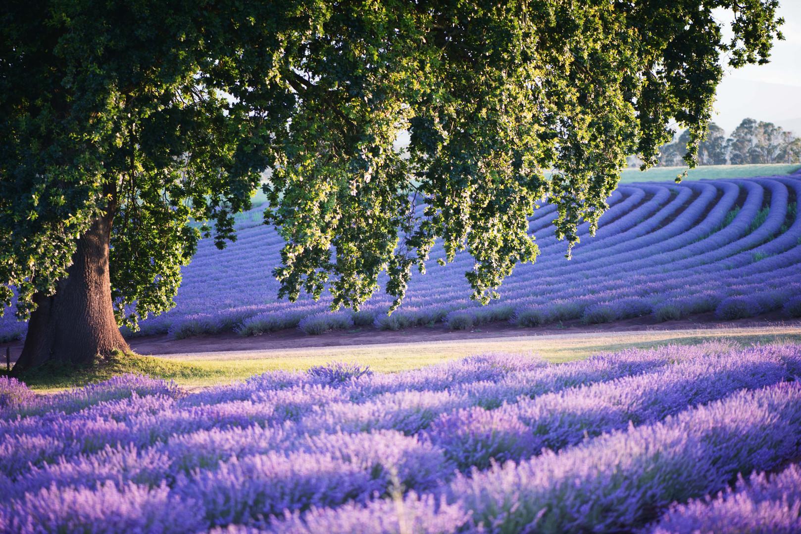 1Glorious oak - photo credit Ockert Le R