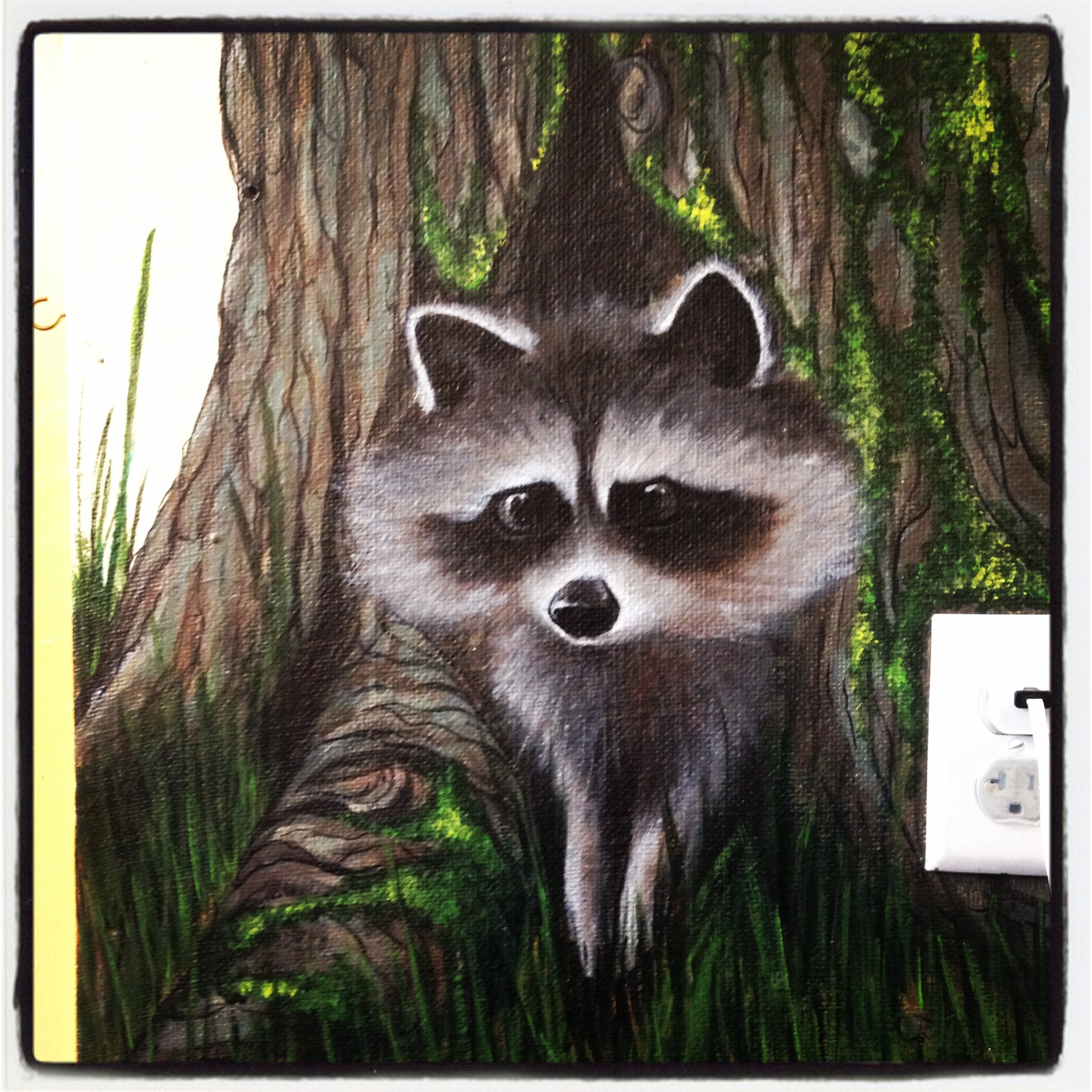 raccoon detail