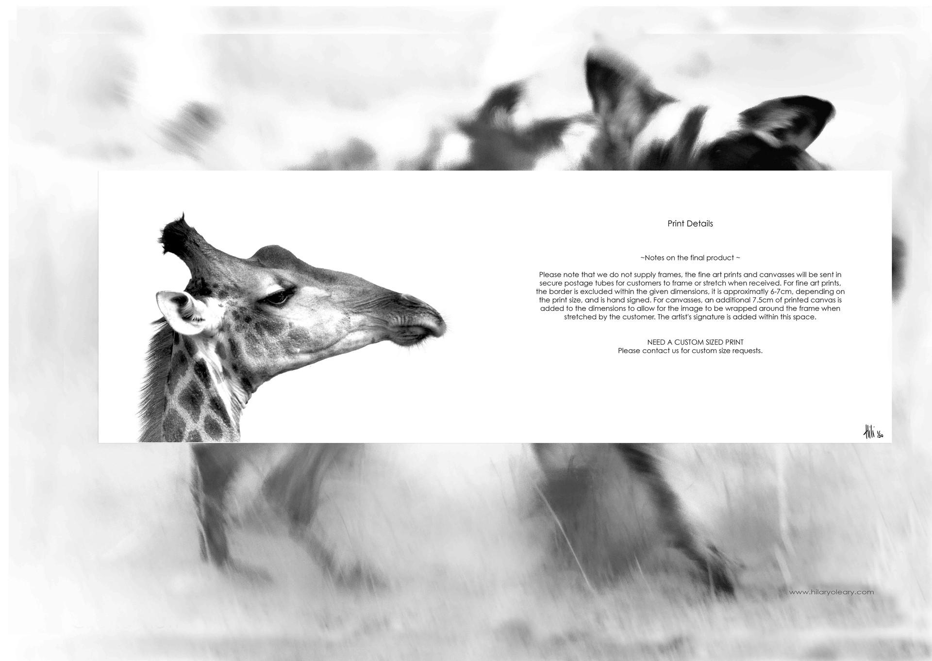 48 print details.jpg