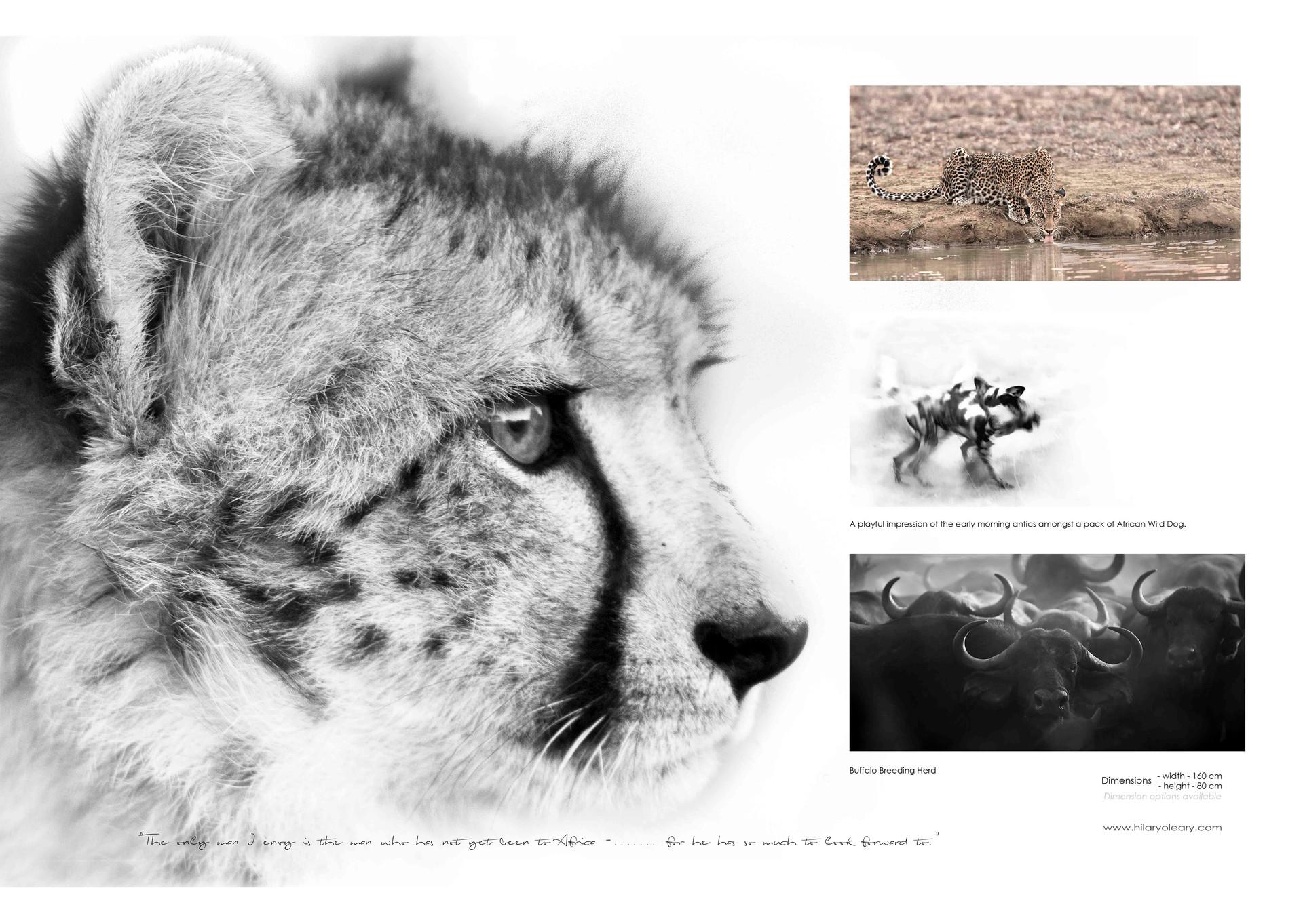 21 page cheetah.jpg